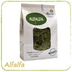 Alfalfa, heno para conejos, chinchillas y cobayas